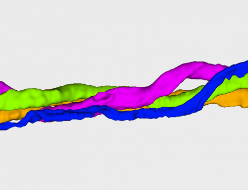 Analysing nerves in 3D